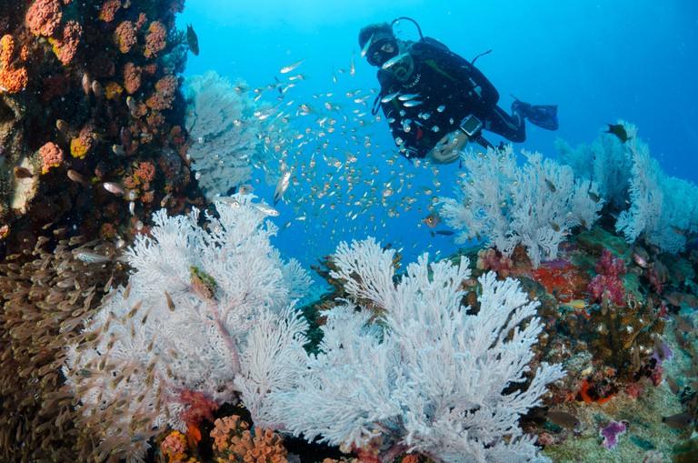Sea fans, Seychelles, Indian Ocean