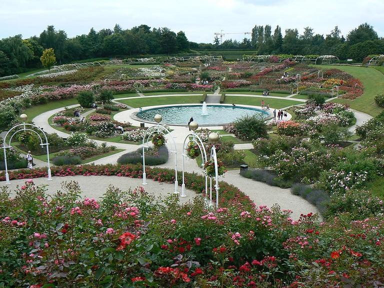 Colline aux Oiseaux Rose Garden