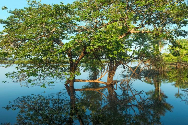 Flooded forest, Amazon river, Amazona state, Brazil