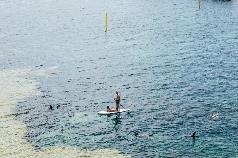 paddleboard-dolphins-watersports
