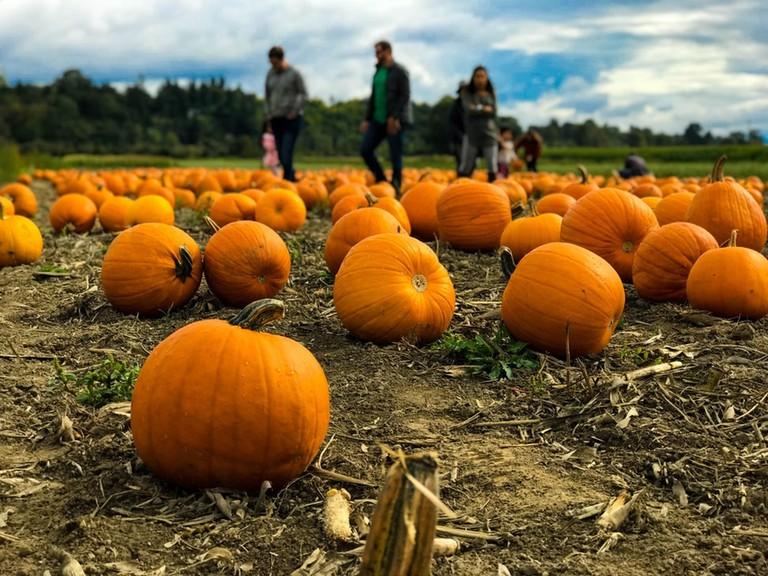 Hull-o Farms pumpkins