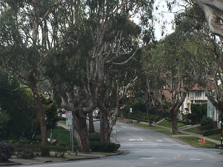 St. Francis Wood street view