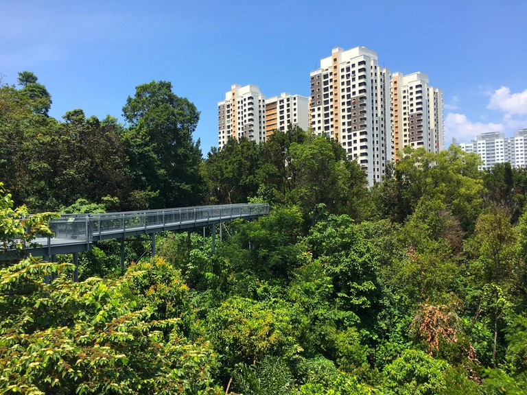 Tree top forest walk in the Southern Ridges trail, Singapore.