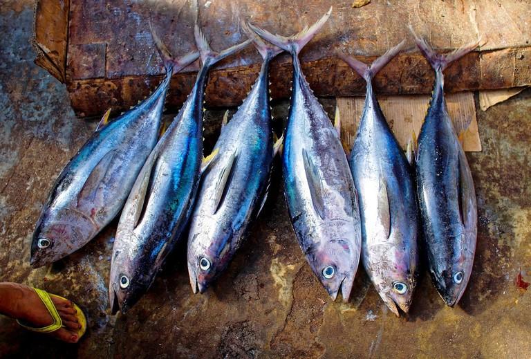 tuna-fish-954073_1280