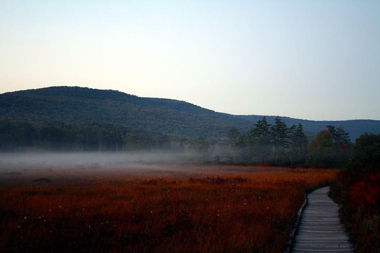 1024px-Cranberry-glades-fog-1-wv