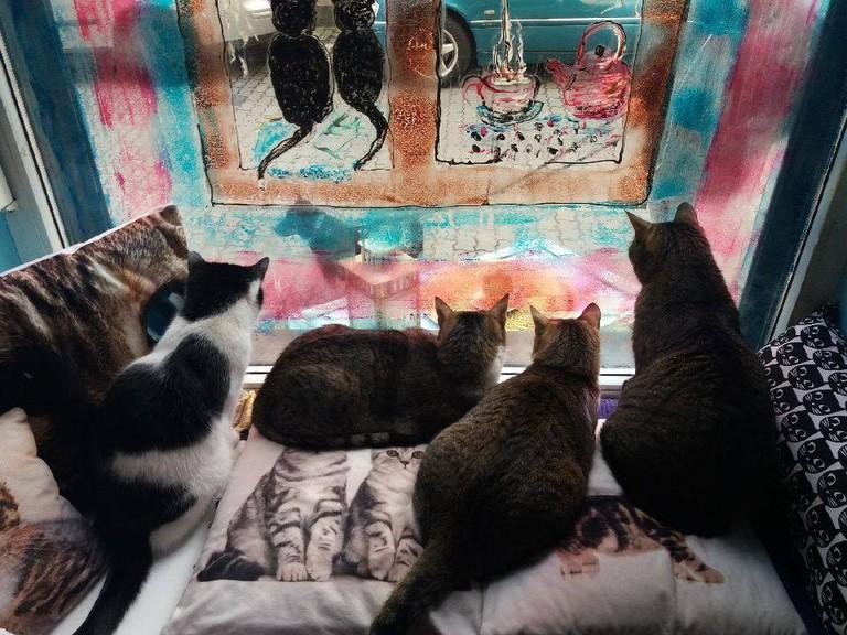 Cats in Herbaciarnia Kocie Oczy   Courtesy of Herbaciarnia Kocie Oczy