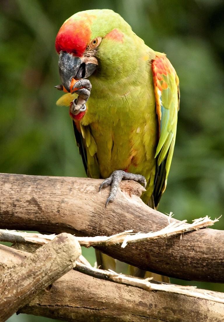 Bolivia birding