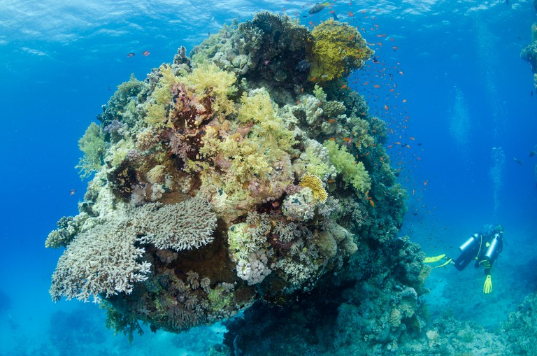 Red Sea coral reef, Safaga, Egypt, Red Sea, Indian Ocean