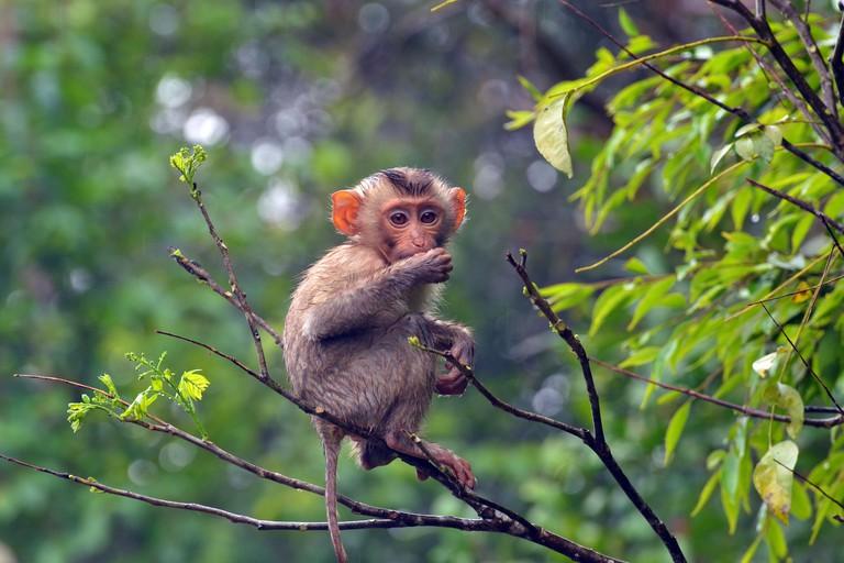 Monkey Thailand Khao Yai National Park