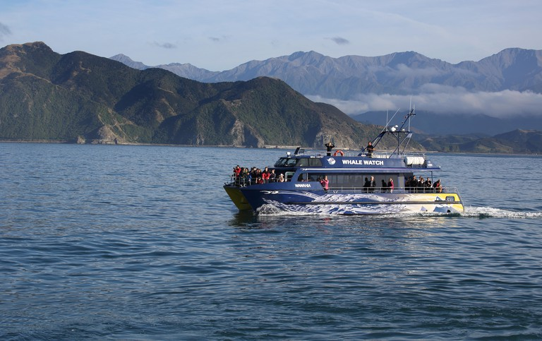 whale watching boat at kaikoura on the south island of new zealand