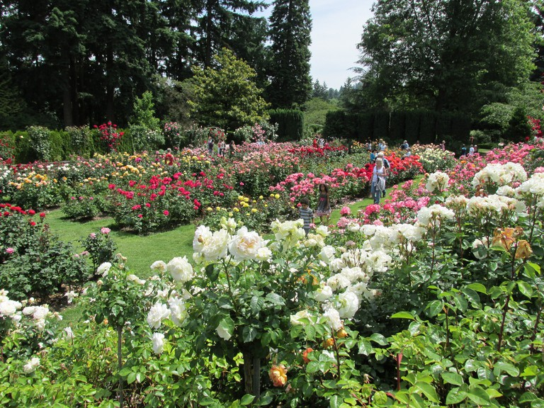 international-rose-test-garden