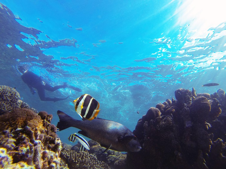 Snorkeller underwater with fish and corals, North Bay, Lord Howe Island, NSW, Australia. No MR or PR