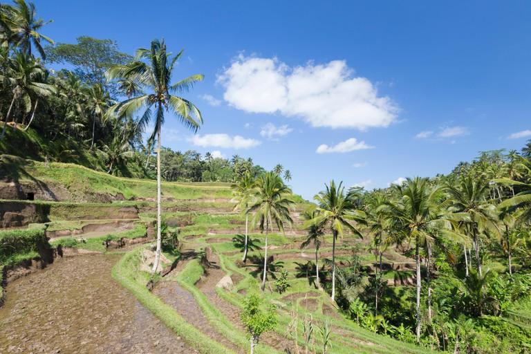 Rice terraces near Tegallalang, Bali, Indonesia