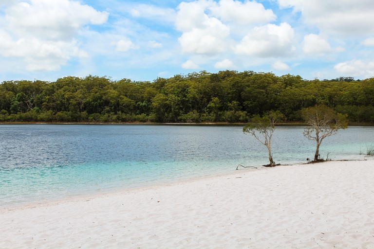 Famous two trees at Lake McKenzie on Fraser Island with crystal clear blue water during summer (Fraser Island, Queensland, Australia)