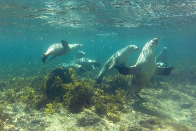 Sea lions off the Eyre Peninsula © Tom Smith