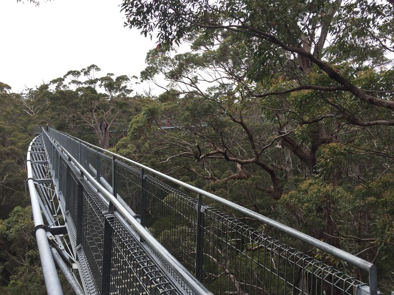 Valley of the Giants Tree Top Walk | © Tom Smith