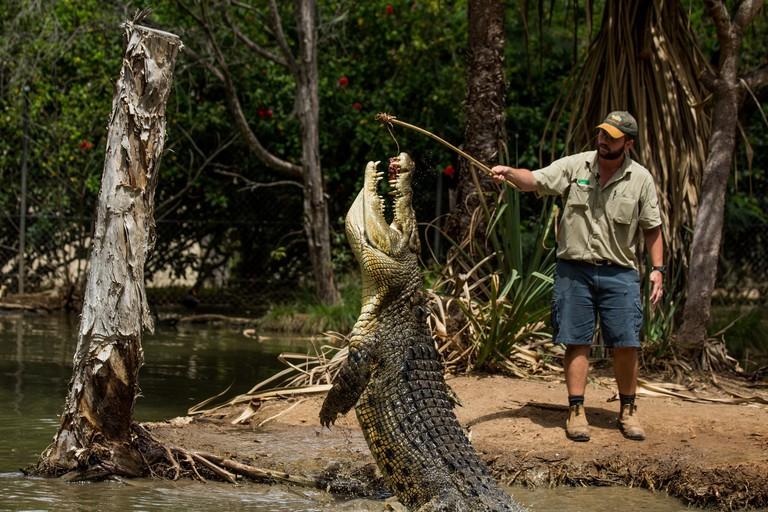 Crocodile feeding at Billabong Sanctuary