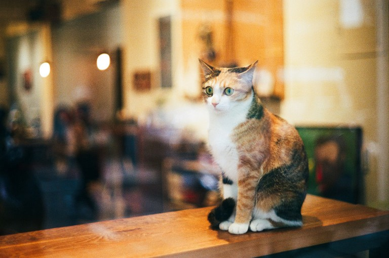 Cat in the window of a cat cafe © Sai Mr / Flickr
