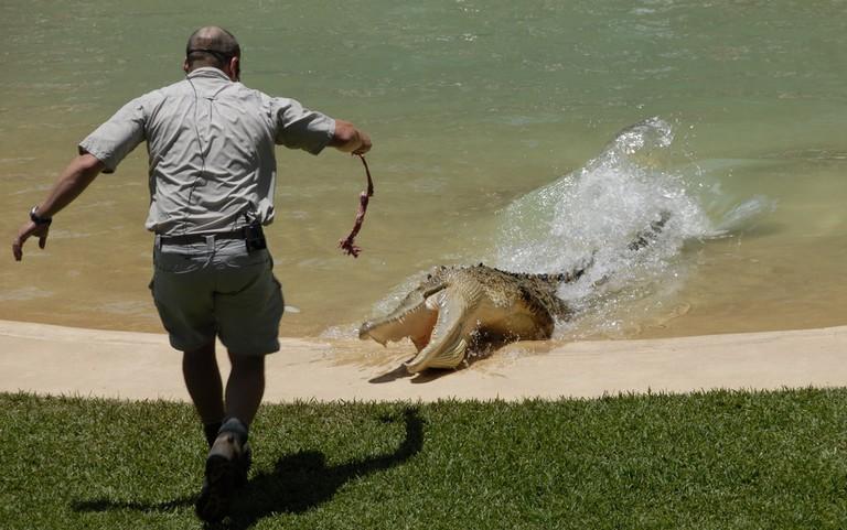 Crocodile feeding at Australia Zoo © thinboyfatter / Flickr