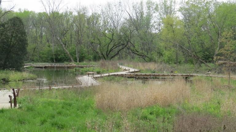 Lippold Park boardwalk and nature trail, North Aurora, Illinois