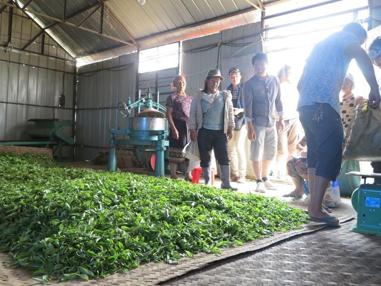 Phongsaly Tea Trade_preview