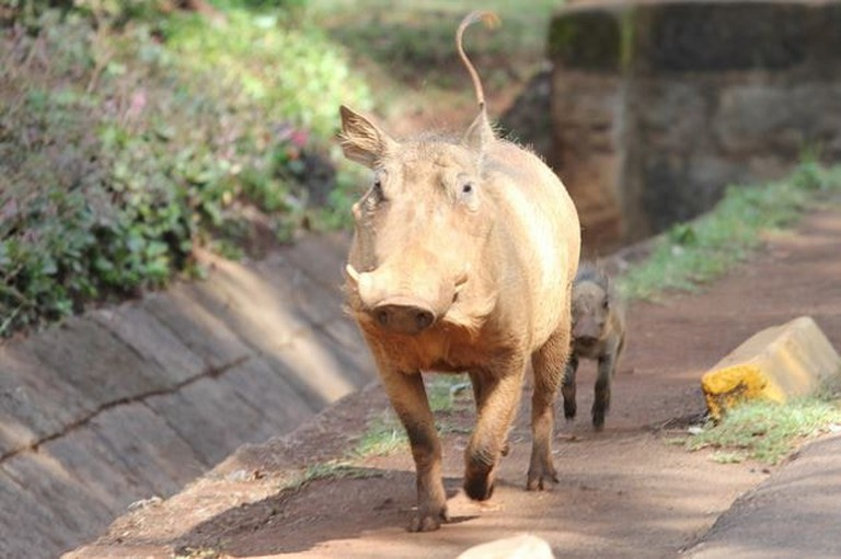 The Nairobi National Park