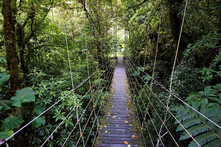 Bridge through Juan Castro Blanco National Park.