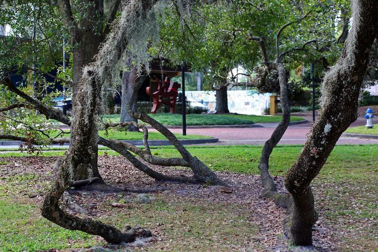 Live Oak at Orlando Loch Haven Park