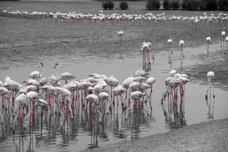 Al Wathba Wetland Reserve