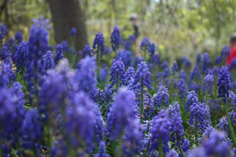 Green Bay Botanical Garden | © Nixy J Morales/flickr