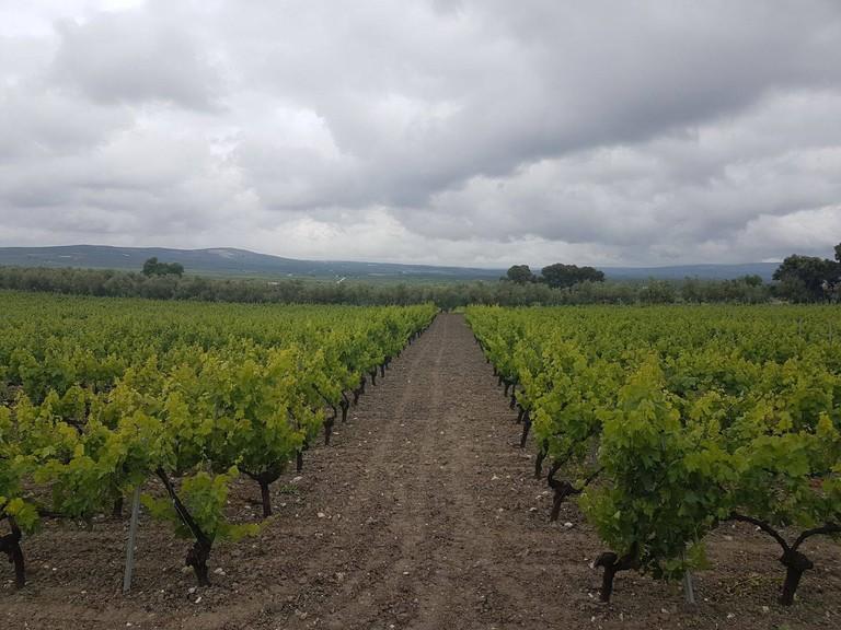 Bodegas Chivite, Navarra