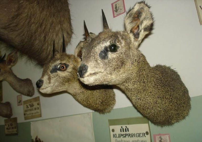 Mummified animals on display at the Zoological Natural History Museum