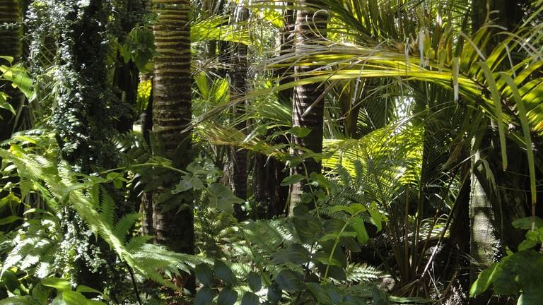 rainforest-78516_1280
