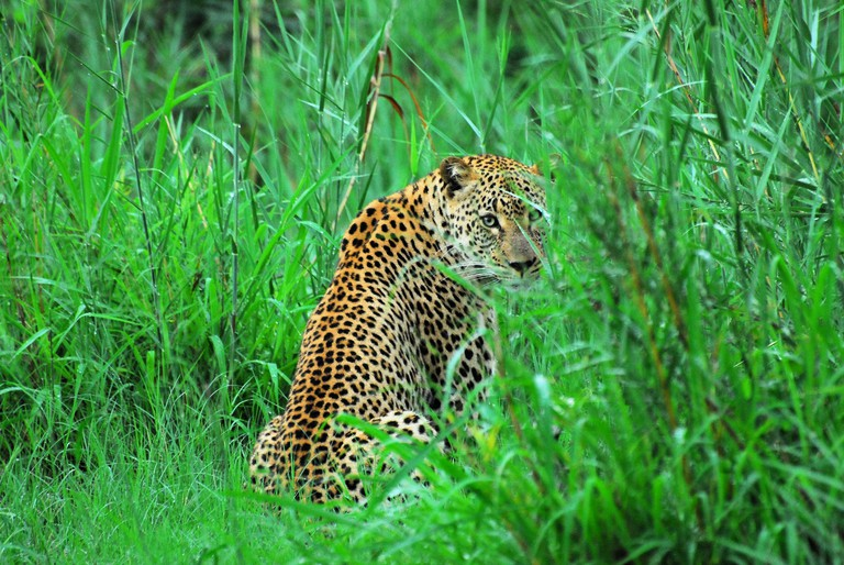 Leopard at Kwandwe Game Reserve