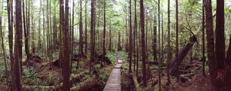 Cape Alava Trail, Olympic National Park