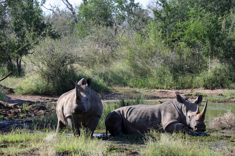 Rhinos in the Hlane Royal National Park