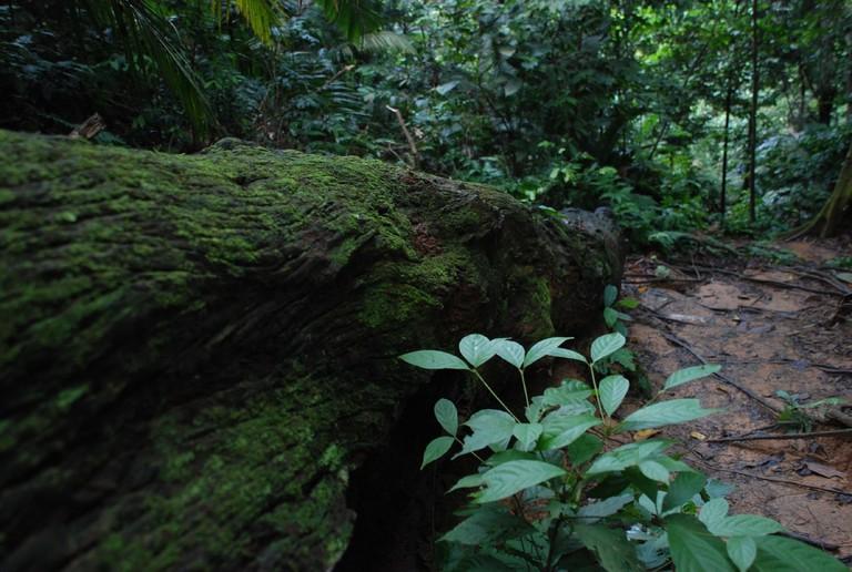 ecotourism near kuala lumpur