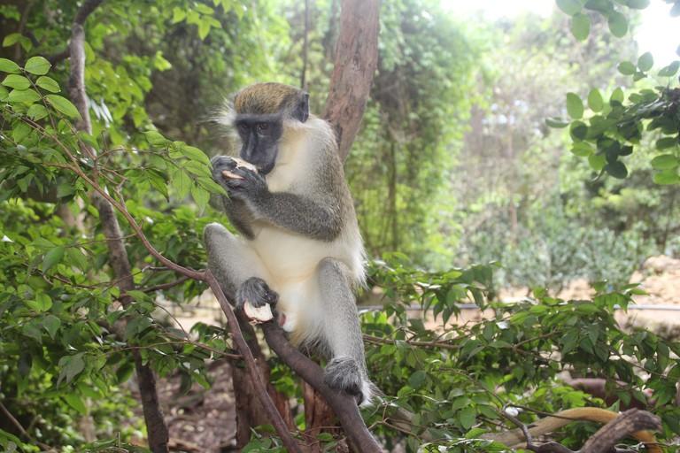Barbados Wildlife Reserve | © Pixabay