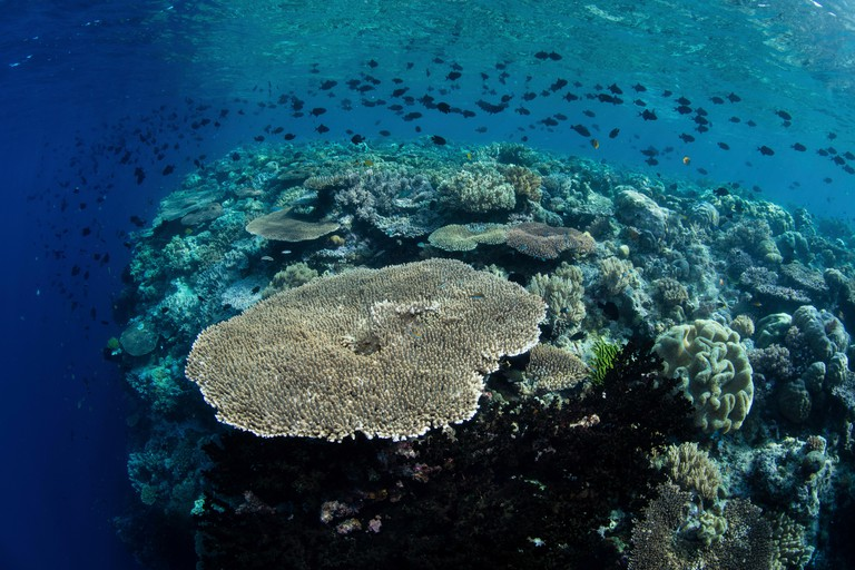A beautiful coral reef thrives in Wakatobi National Park, Indonesia.