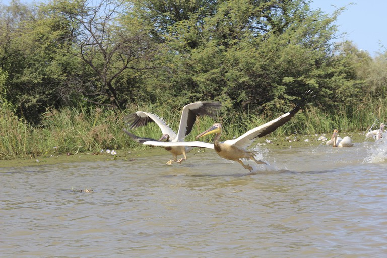Djoudj National Bird Sanctuary, in the north of Senegal, is popular for the migrating birds.