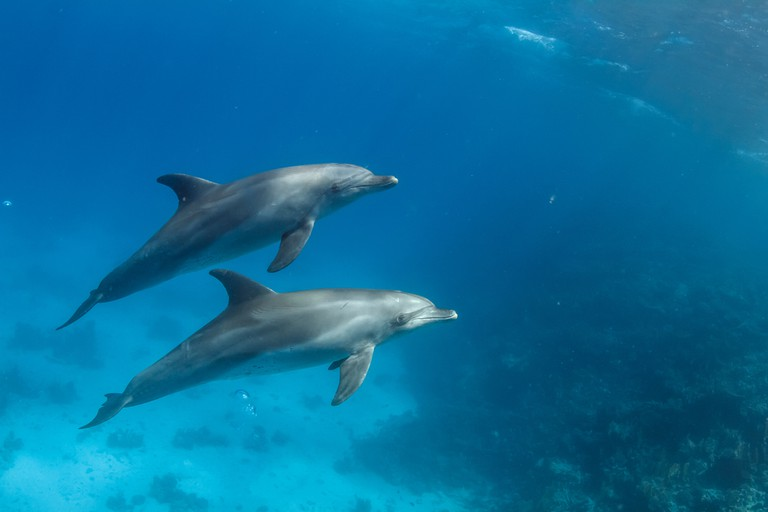 Wild dolphins underwater.