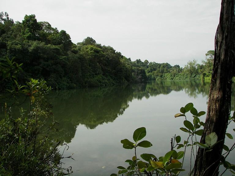 Upper Peirce Reservoir Singapore