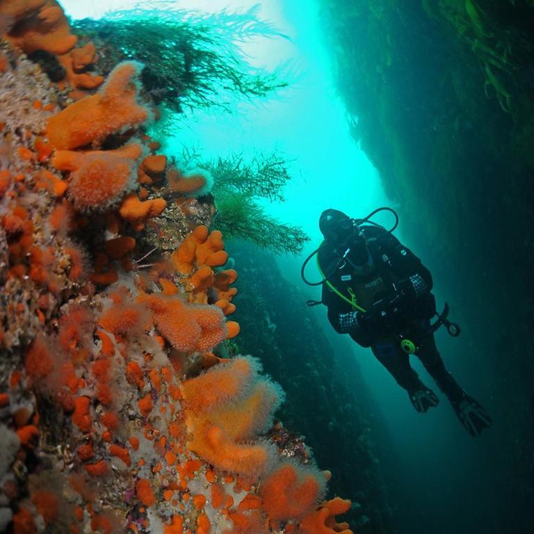 Diving in Lofoten holds many surprises, Courtesy of Lofoten-Diving.com Ballstad and Svolvaer