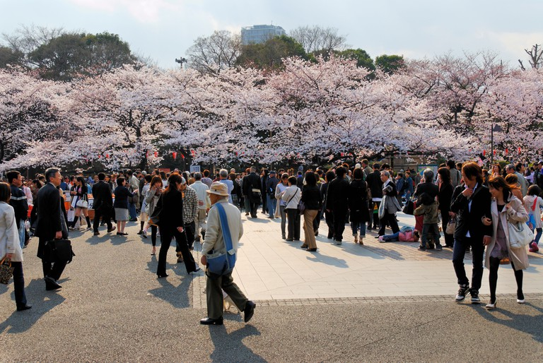 Crowd of Japanese people viewing cherry blossoms in Ueno Koen Park, Tokyo.