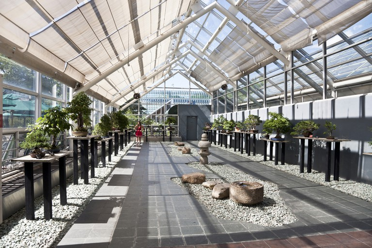 Bonsai and rock display in glass roofed Steinhardt Conservatory of Brooklyn Botanic Botanical Garden in Brooklyn, New York.
