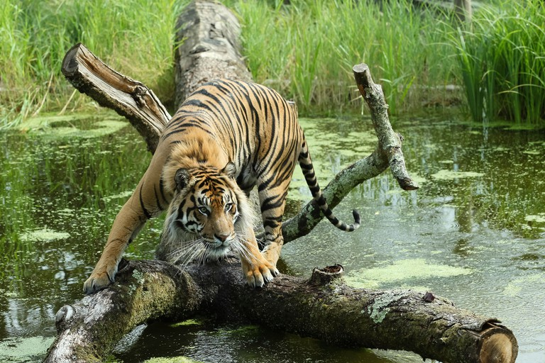 Hundreds of species live at London Zoo