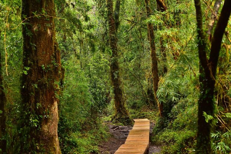 Walkway into Alerce Andino National Park