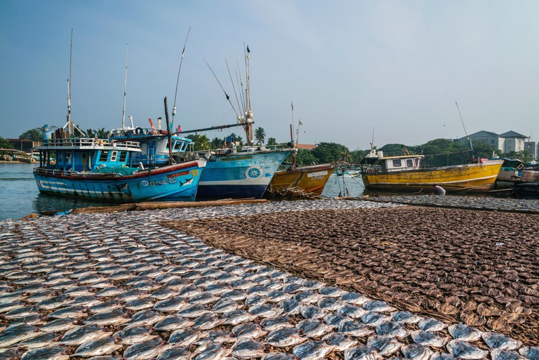 Visit the Negombo Fish Market Complex on a weekend to pick up a bargain