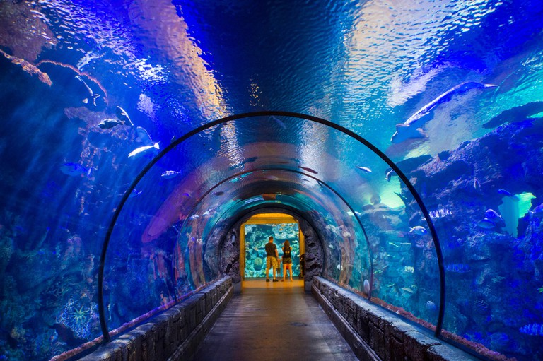 The Shark Reef Aquarium at Mandalay Bay hotel and casino in Las Vegas