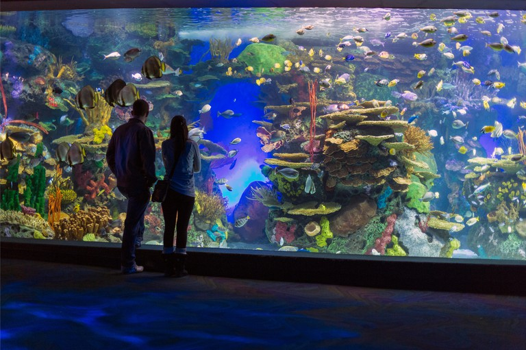 Canada,Ontario,Toronto,Ripley's Aquarium of Canada, people viewing a display. Image shot 2015. Exact date unknown. Ripley's Aquarium of Canada is home to 20,000 aquatic animals